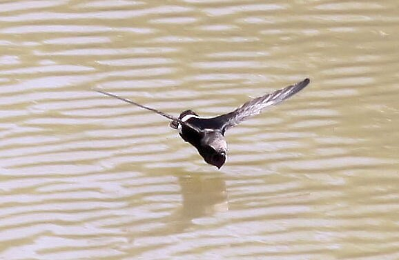 Swallow Dive by Vaughn  Shaw
