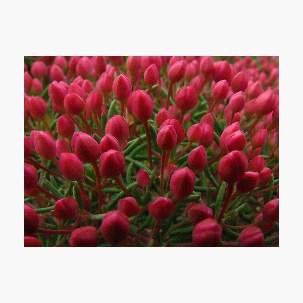 tiptoe through the tulips Photographic Print