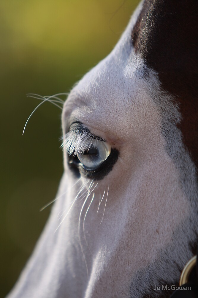 The horse's perspective by Jo McGowan