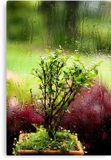 Rainy days and mondays always make me cry by Vikram Franklin