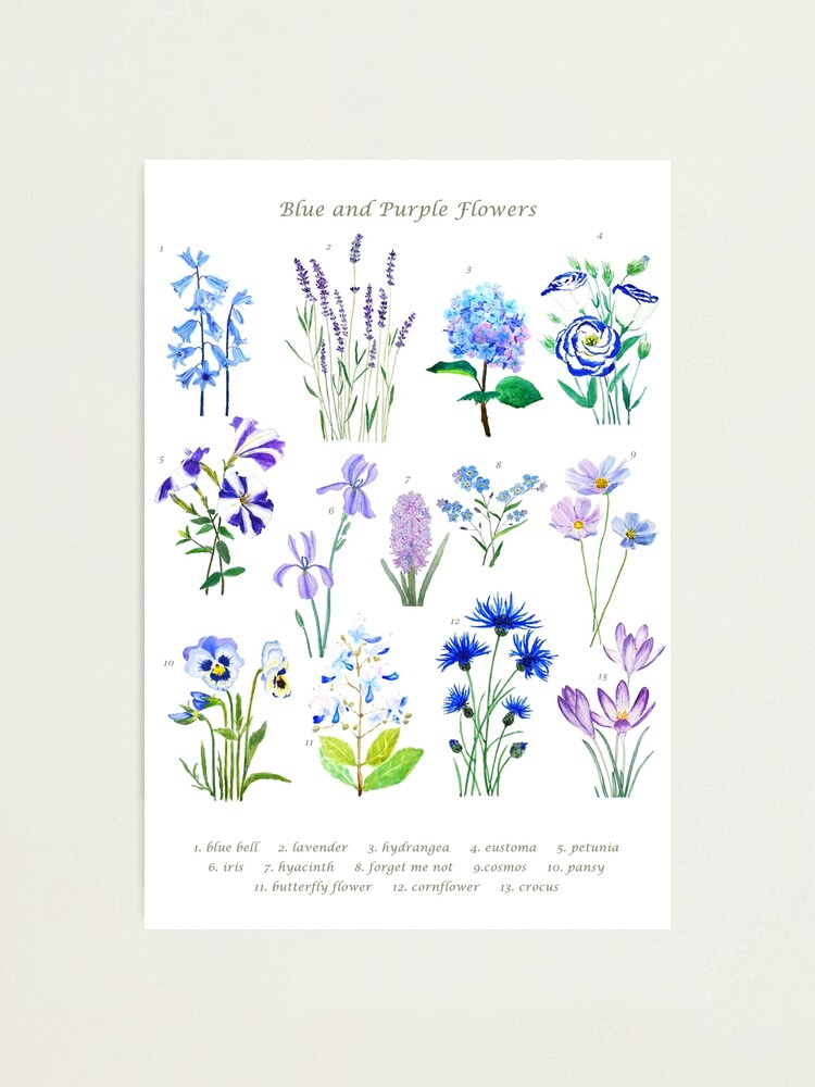 Alternate view of blue and purple  flower collection watercolor  Photographic Print