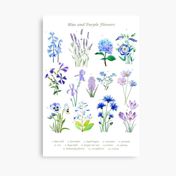 blue and purple  flower collection watercolor  Canvas Print