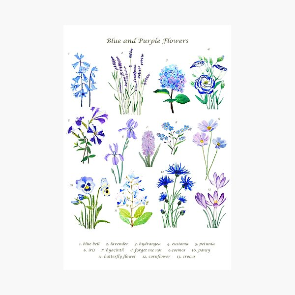 blue and purple  flower collection watercolor  Photographic Print