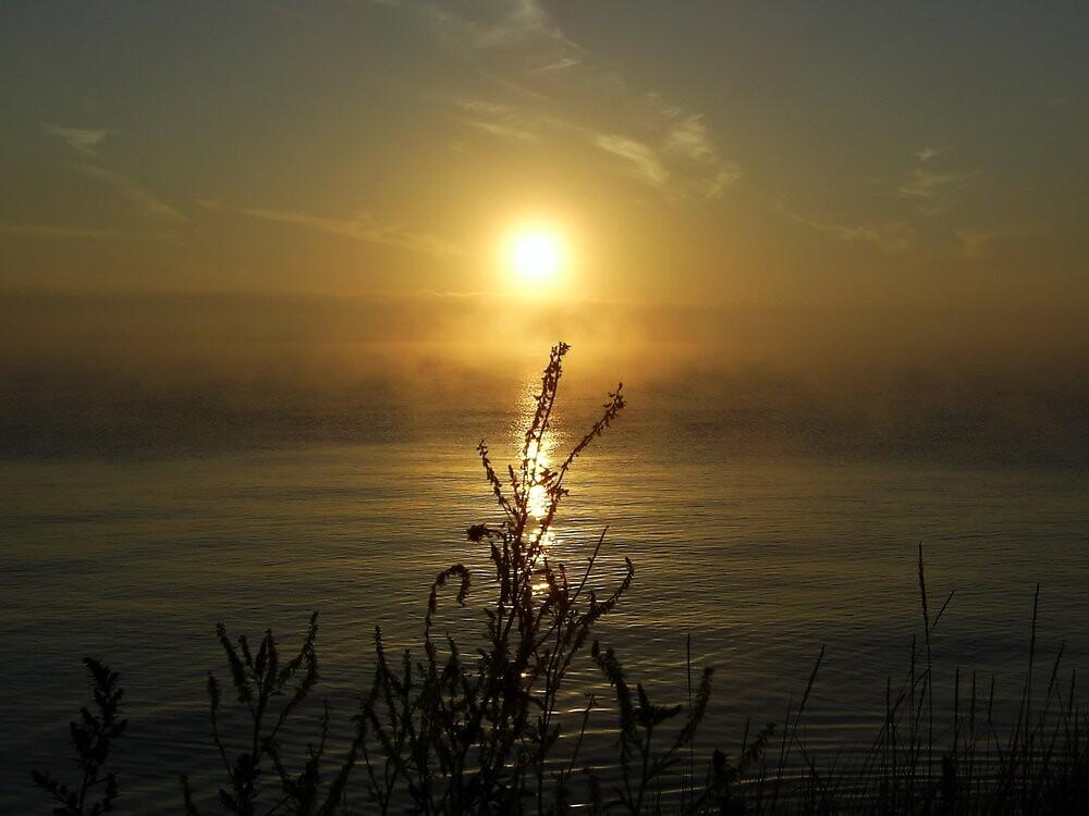 Misty Dawn by jannielund