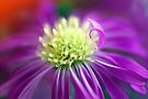 Purple Daisy Heart by Extraordinary Light