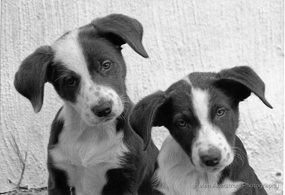 B&W TWINS by Helen Akerstrom Photography