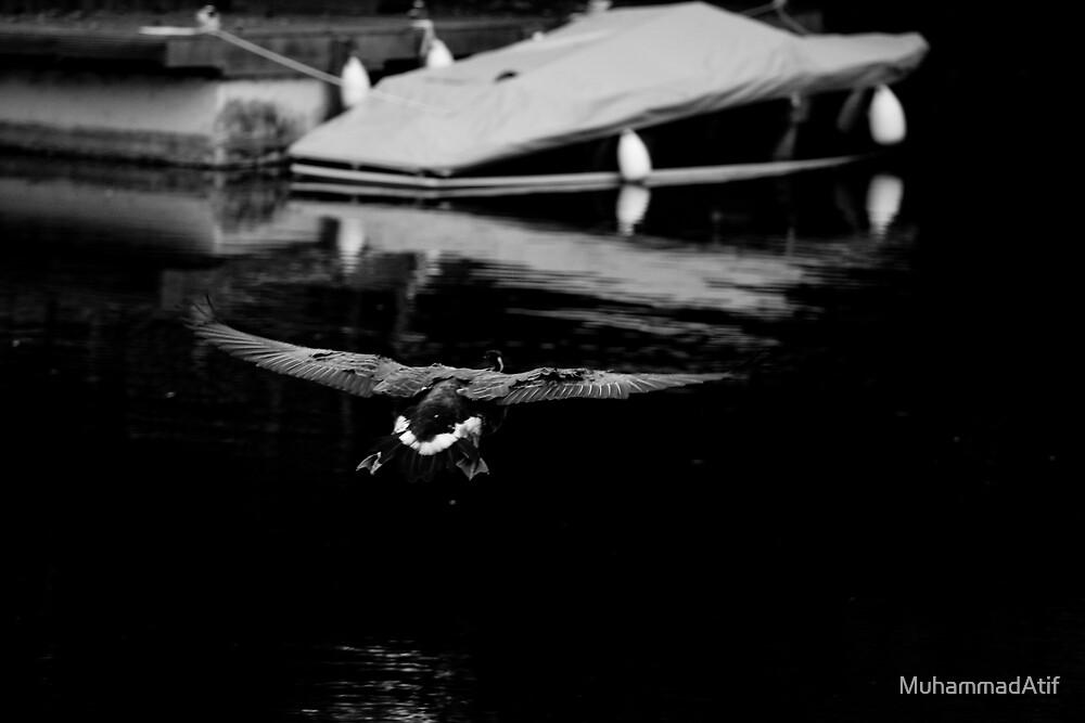 Fly Fly by MuhammadAtif