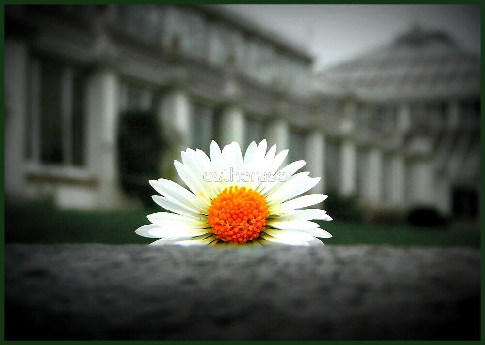 daisy by estherase