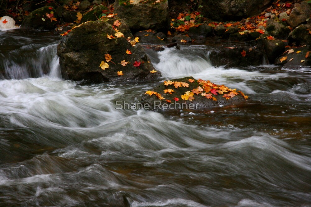 Change of Season - Credit River, Ontario by Shane Rechner