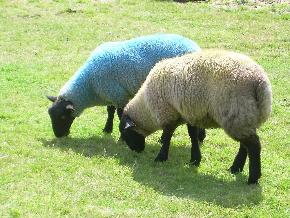 Blue Sheep and Friend by Angela Wiley