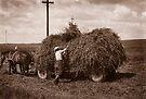 Hay Wagon, Carpathian Foothills, Ukraine by Yuri Lev