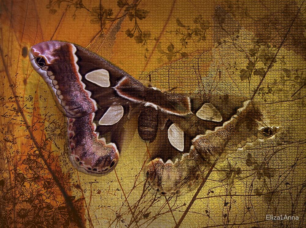 A mexican moth by Eliza1Anna