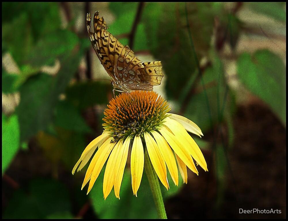 Magic Butterfly by DeerPhotoArts