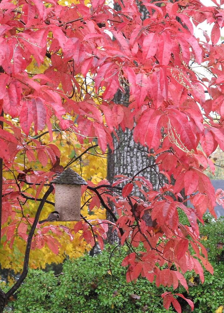 Autumn Chickadee - Maryland by caroler7