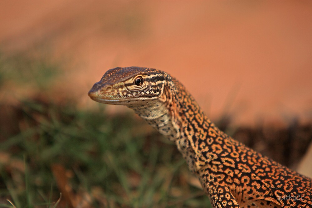 friendly perentie by quicky22