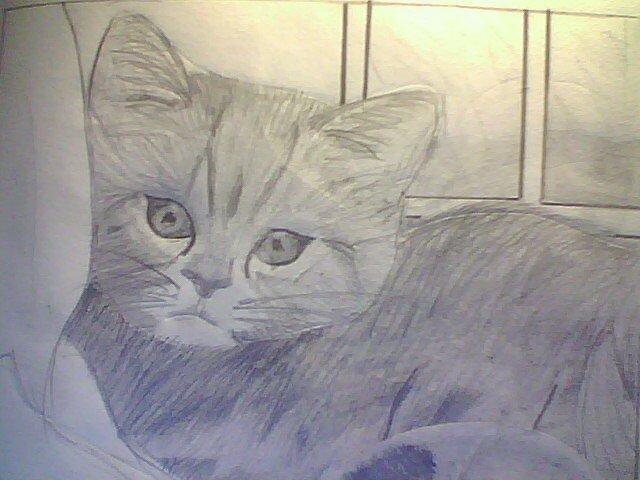 Kitty Cat by samurai214