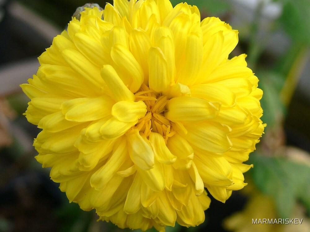 yellow pettle by MARMARISKEV