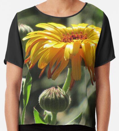 wunderschöne, gelbe Ringelblume, Blüte, Blume, Natur Chiffontop