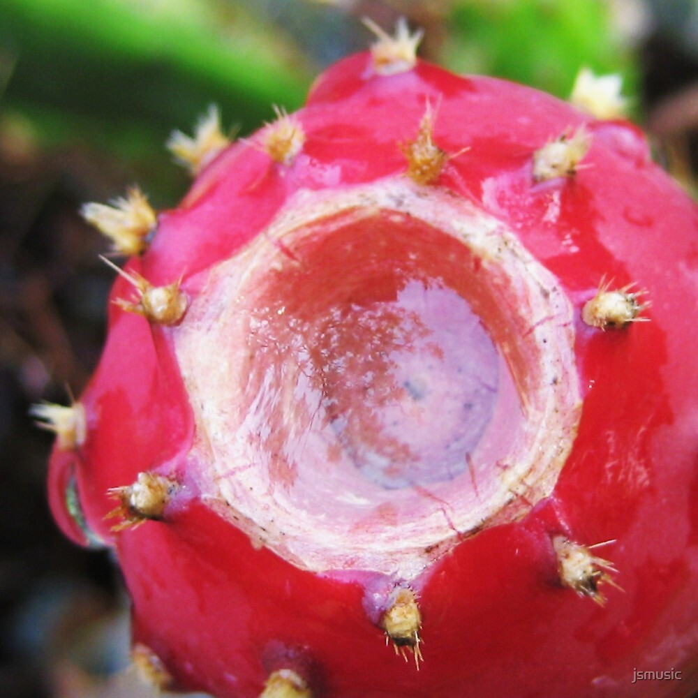 Red Prickly Pear by jsmusic