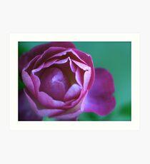 A portrait of a pink flower Art Print