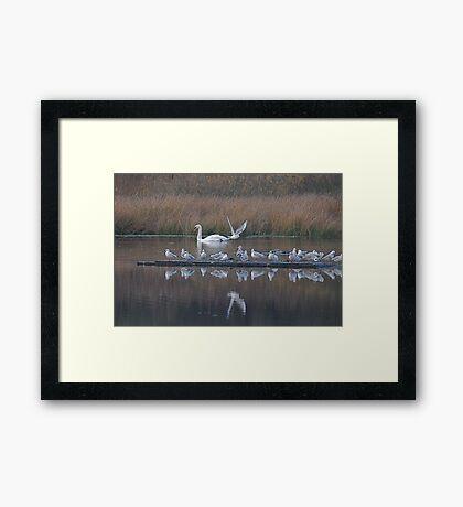 magra1 Framed Print