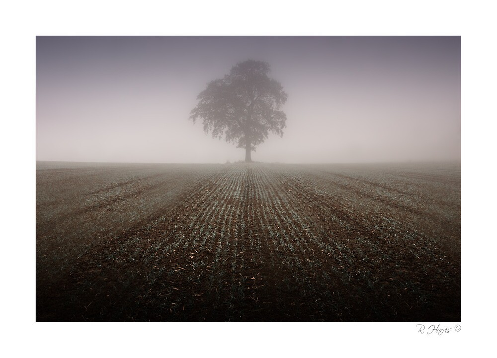 Lost in the fog - Boughton Westwood, nr Much Wenlock by rharris-images