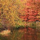 Turtle Pond by Marjorie Smith