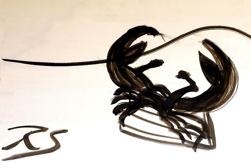 Crab On Driftwood by Rob  Schafer