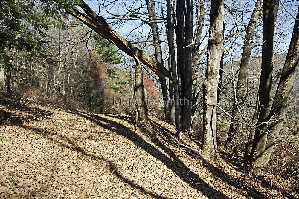 Shadows Of Late Fall by Marjorie Smith