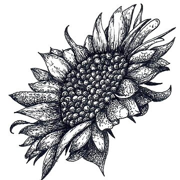 Black and White Sunflower by Surrealist1