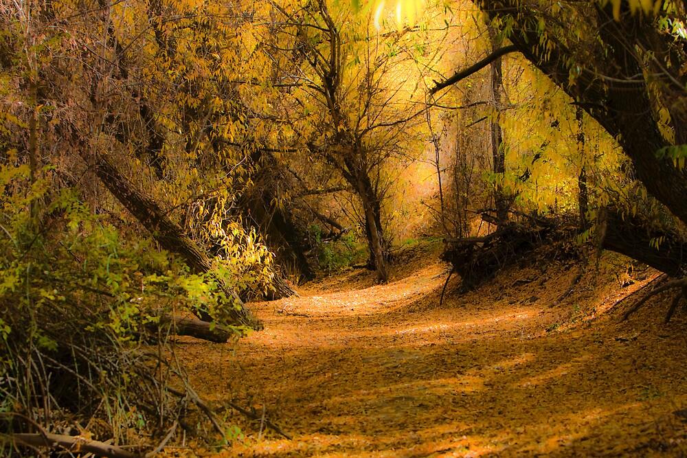 Autumn at Wheeler Farm by Ken Fortie
