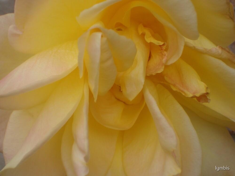 Buttercream by Lynn Stratton