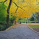 Fall Path by Marjorie Smith