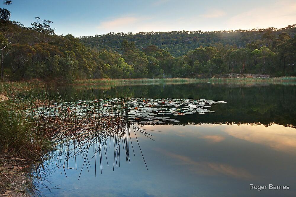 Brooklyn Dam, Ku-Ring-Gai National Park, Sydney by Roger Barnes