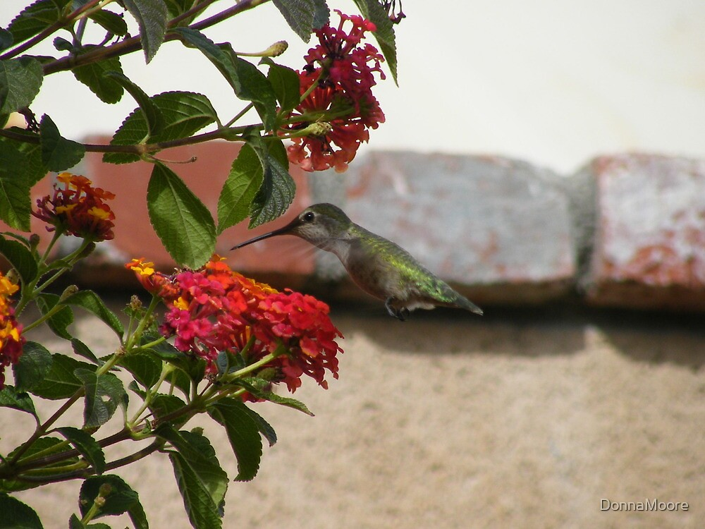 An Anna around the Lantana.... by DonnaMoore