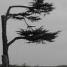 Tree by Lisa Williams