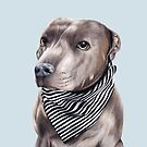 Blue Staffordshire Bull Terrier by Apatche Revealed