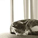 Sleeping Oscar by Leigh Ann Pobiak
