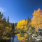 Bishop Creek North Fork Fall by photosbyflood