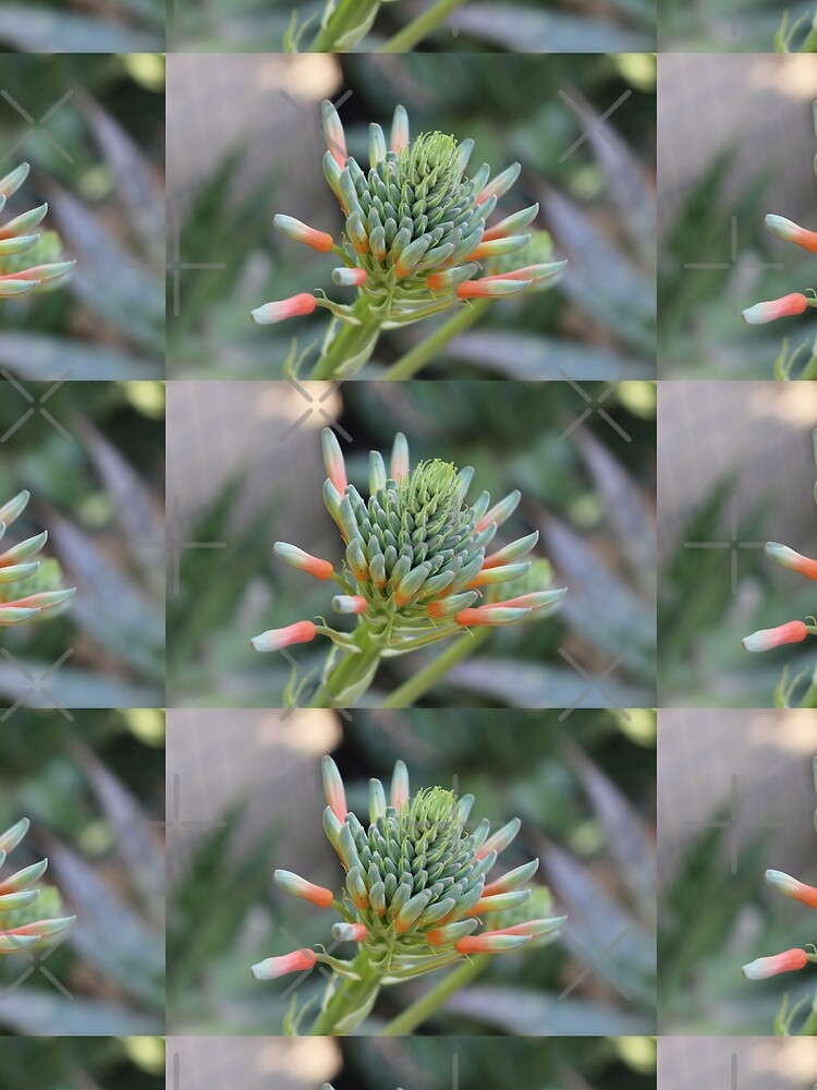 Hoher Kontrast Blume von KUROIAKUMA