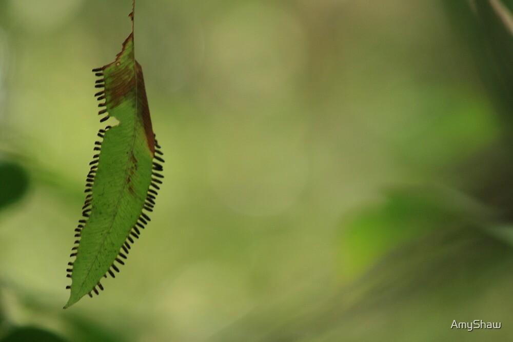 Strange leaf by AmyShaw
