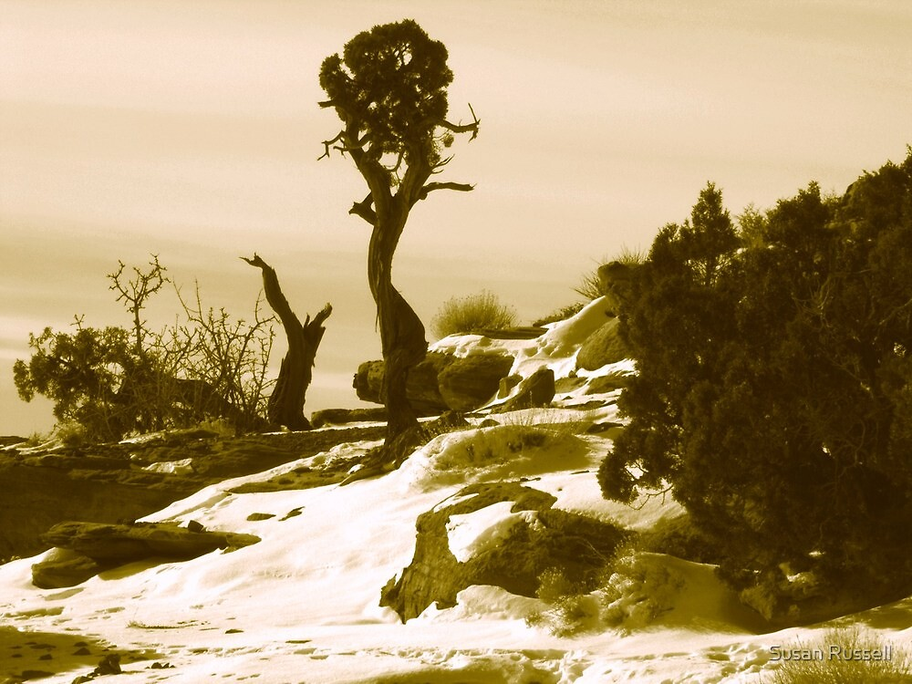 Tree at the Canyonlands in Sepiatone by Susan Russell