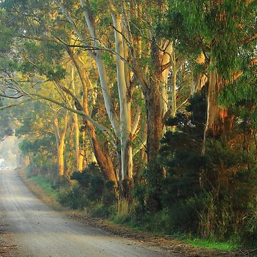 Lades Road Gums by phillip24
