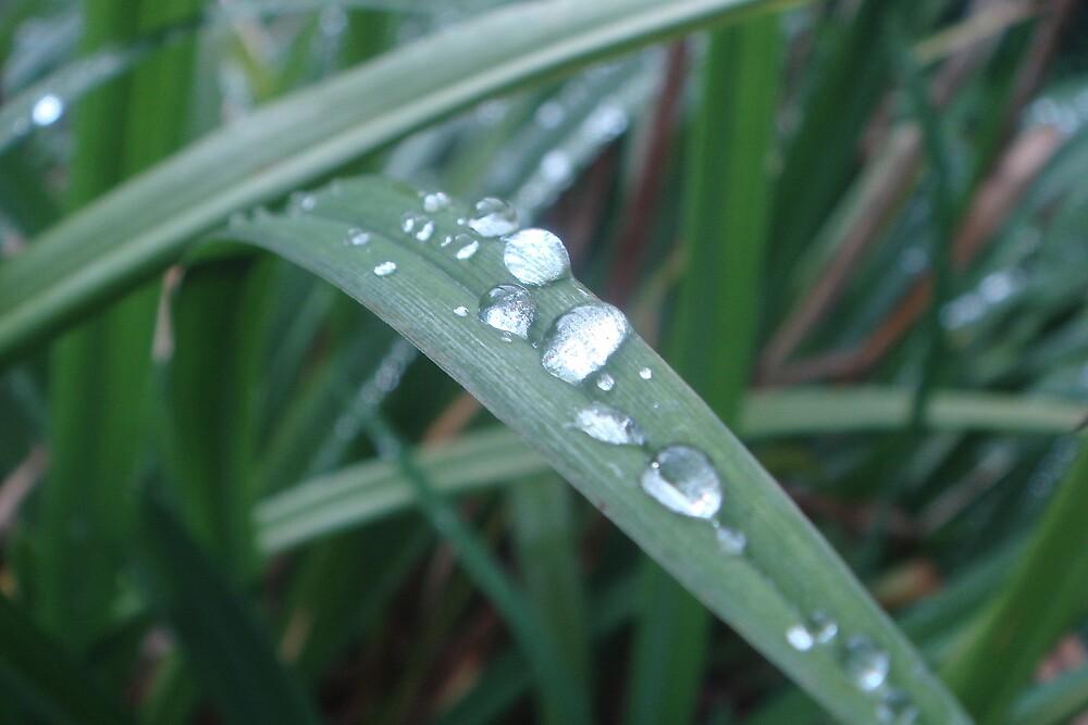 Rain pearls by primozomirp