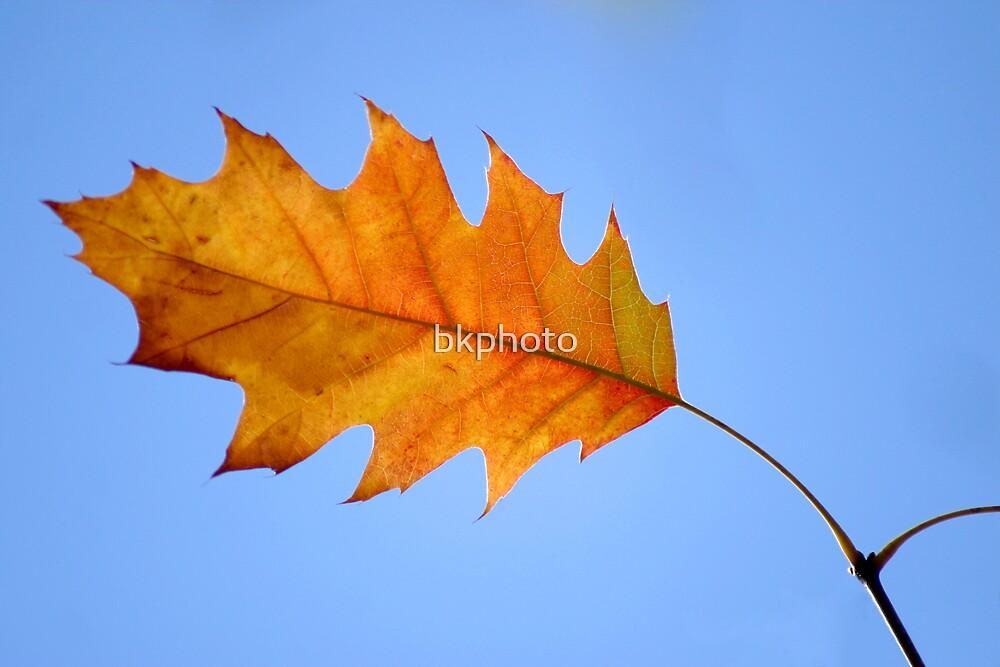 Autumn VII by bkphoto