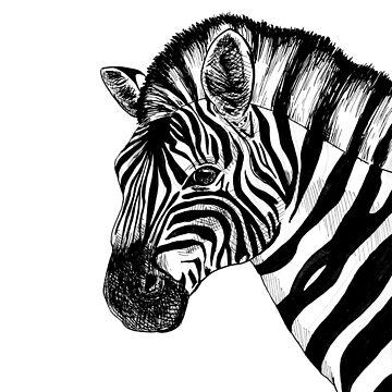 A Zebra by srw110
