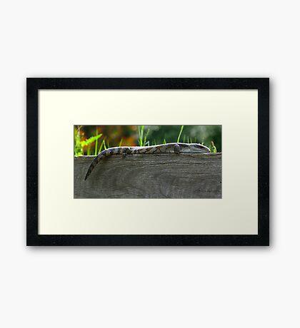 The good life - Lizard Framed Print