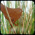 Rusty bird by Northcote Community  Gardens