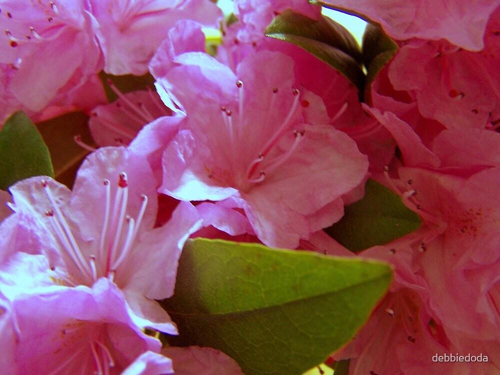 Pink by debbiedoda