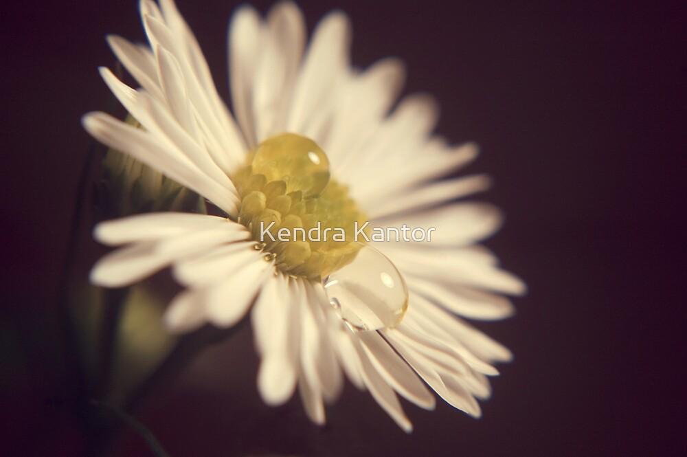 Flower Drops by Kendra Kantor